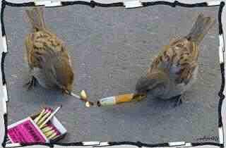 Birds Smoketime
